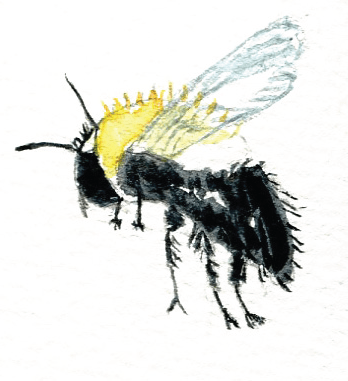 Bee by Maria Larsson