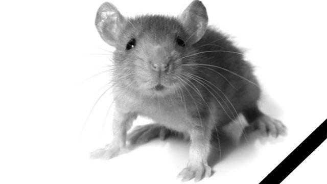 Моя первая мышь