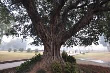 Apenas uma linda árvore encontrada em um dos jardins.
