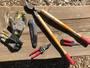 tree and shrub pruning tools