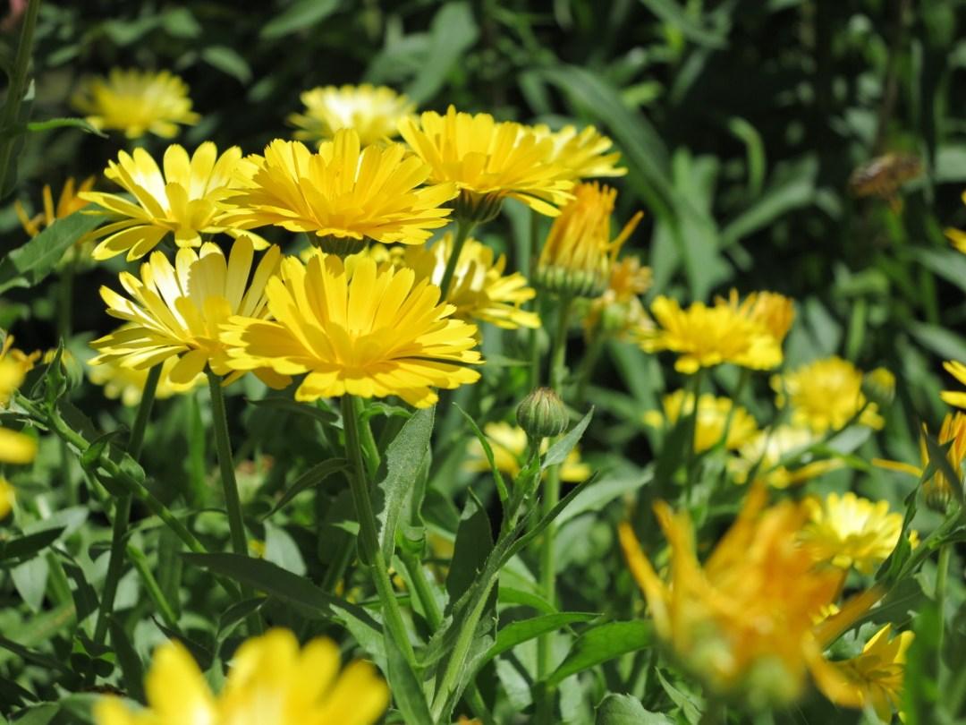 Flowers in field Double-Barrelled Travel