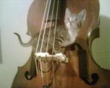 cat on bass bridge.jpeg