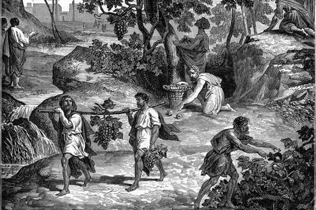 Doubleblind: an illustration of the bible featuring men carrying grapes. In this article, Doubleblind explores if there we psychoactive plants in the bible.