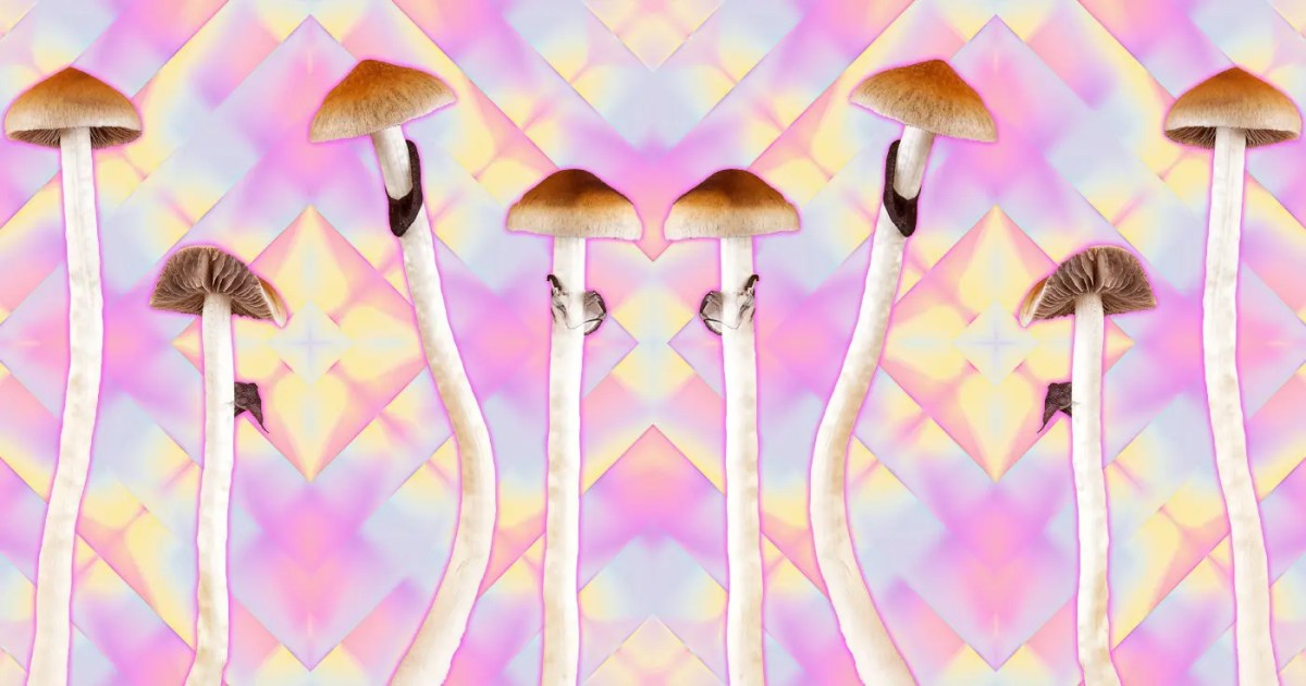 DoubleBlind: Image of psilocybe cubensis on pink fractal background. In this article, DoubleBlind explores gold cap shrooms.