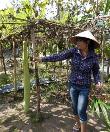 Thai Long Gourd
