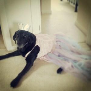 Is Pet Rent Legal In Massachusetts _Fotor