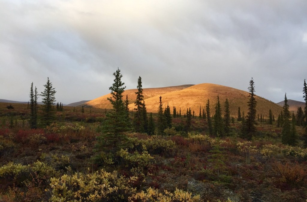 What Makes a Double-Shovel Outfitter's Trip