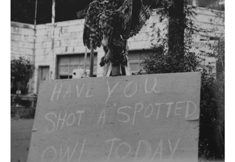 "Black and white photograph of a dead spotted owl above a plywood sign that reads ""have you shot a spotted owl today?)"