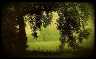 The green fields that dot the landscape near New Delhi.