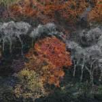 Hanging-Woods-Autumn--1.