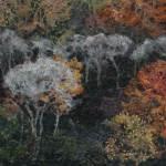 Hanging-Woods-Autumn--2.