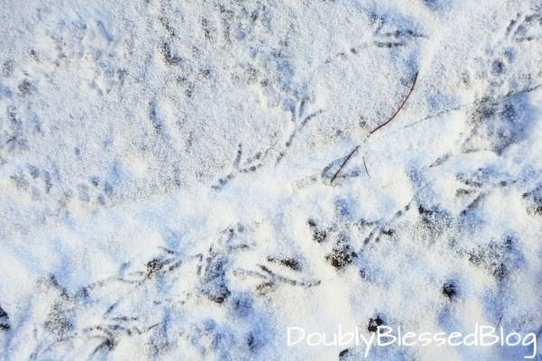 Spuren im Schnee suchen