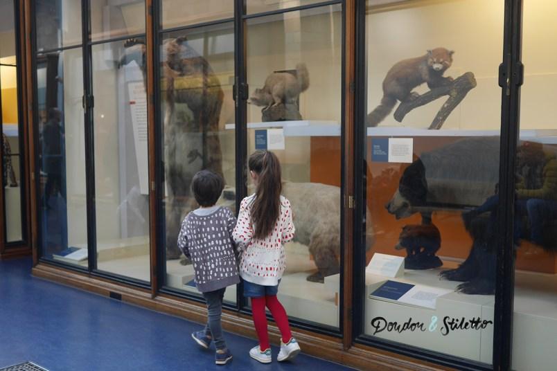 Musée d'histoire naturelle londres 4