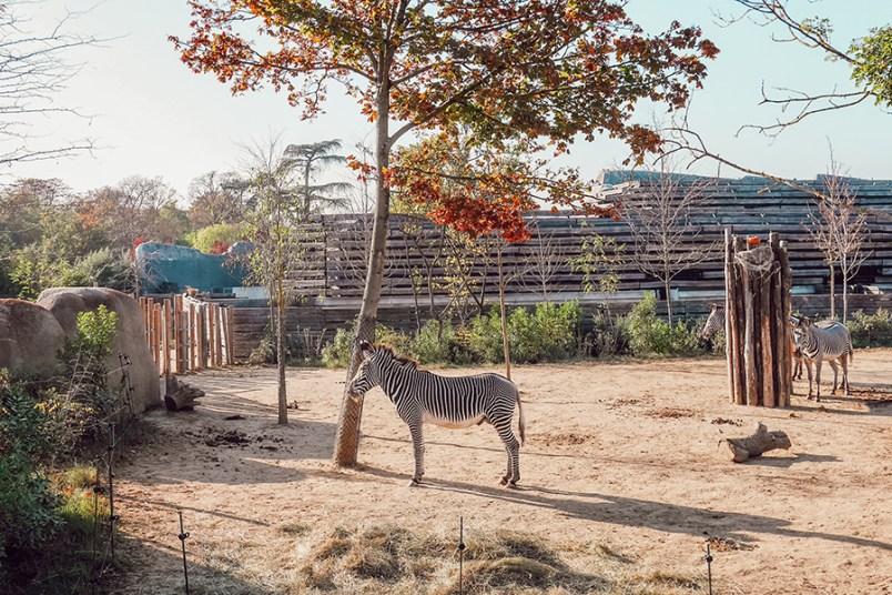 Parc zoologique de Paris - Halloween13