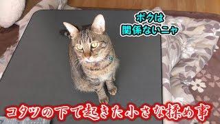 我が家の猫はコタツで丸くならないようです(面白い&可愛い猫)
