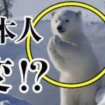 【海外の反応】衝撃!外国人がびっくり!?「ありえない!!」日本人ならではのある言葉に驚愕!!