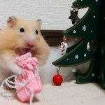 咀嚼音がたまらん!ハムスターのクリスマス!おもしろ可愛いハムスターChristmas to enjoy the Funny hamster mastication sound!