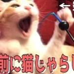 寝起きのロビンに猫じゃらしを見せたらすごいことになったwww