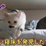 猫フク姫、暖かい寝床を発見したようです(面白い&可愛い猫)