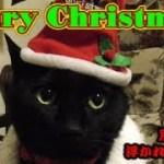 猫トリオ、飼い主に付き合わされるクリスマス・イブ(面白い&可愛い猫)