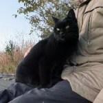【地域猫】膝乗りニャ~ンズ!~走って来る猫が可愛い件~【魚くれくれ野良猫製作委員会】