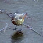 【野鳥】釣り場に可愛いスケーターがやって来る。【魚くれくれ野良猫製作委員会】
