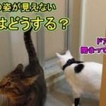 飼い主の姿が見えない!猫トリオはどうする??(面白い&可愛い猫)