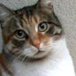 凄い!猫を虐めたオス猫に猫パンチをした賢い猫!猫は見てるね