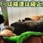年明け後、猫トリオの様子は…?(面白い&可愛い猫)