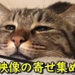 猫トリオ、短編映像寄せ集め(面白い&可愛い猫)
