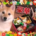 犬用の超豪華おせち料理の食いつきが凄い!!