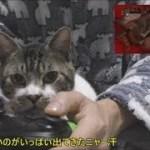 ゲームを真剣に見る猫の表情が面白い☆リキちゃんは今日もパパにべったりな甘えん坊猫【リキちゃんねる 猫動画】Cat videos キジトラ猫との暮らし