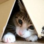 見つけた時の猫の可愛いリアクション