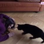 「感動 犬, 猫」飼い主が死んだふり、犬と猫はどう助けてくれるのか?