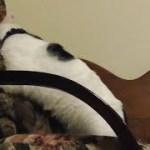 猫シシマル、運動不足解消法のカギは…(面白い&可愛い猫)