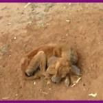 【感動】顎が砕けて瀕死の状態だった犬…献身的な手当てを受け、最高の笑顔を取り戻す!【世界が感動!涙と感動エピソード】