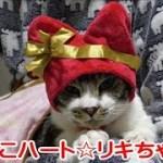 かわいい♥リキちゃんにねこのかぶりもの『ねこハートちゃん』を被せてみたよ☆ねこのかぶりものシリーズ・キタンクラブ・ガチャ・コスプレ猫【リキちゃんねる 猫動画】Cat videos キジトラ猫との暮らし