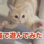 くるくる顔を回す猫が面白い