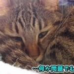 猫ズの穏やかな日向ぼっこ…?(面白い&可愛い猫)