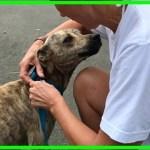 【感動】子犬を守るため、自ら保護を願い出た母犬!子を思う母犬の行動に胸が熱くなる【世界が感動!涙と感動エピソード】