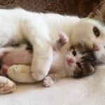 「猫かわいい」 すごくかわいい子猫 – 最も面白い猫の映画 #129