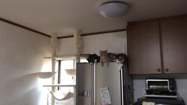 息子と遊んであげる子猫たちがかわいい