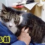 👀【感動 泣ける話】猫とは以心伝心で気持ちは伝わってるんだなと思うお話・招き猫ちゃんねる