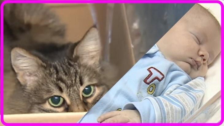 【感動】極寒の中、捨てられた赤ちゃんを守り救ったヒーロー猫!【世界が感動!涙と感動エピソード】