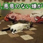 お留守番中、猫フク姫の悪意のない嫌がらせ(面白い&可愛い猫)
