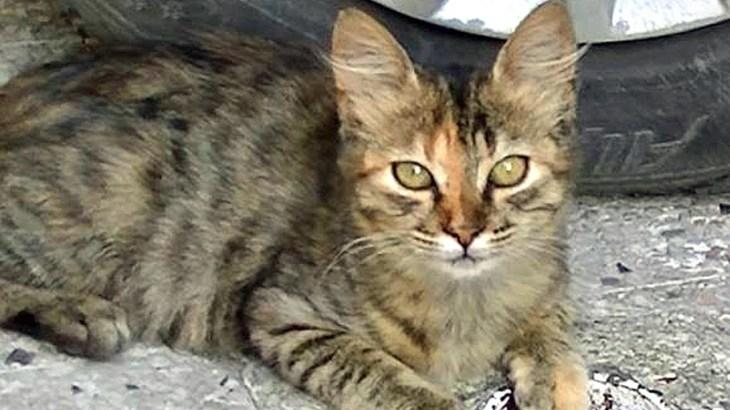 子猫が可愛い母猫にそっくり!母猫と仲良しだと子猫とも仲良くなれる?