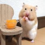 ほのぼの♪にんじんを早食いするおもしろ可愛い癒しハムスターおもしろ可愛い癒しハムスターFunny Hamster to eat carrots quickly
