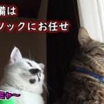 自宅警備は猫の担当、我が家のニャルソック(面白い&可愛い猫)