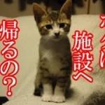 かわいい子猫が突然お家にやってきた-その時、先住猫達は・・・?!4日目-kitten came to our house 5