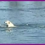 【感動】氷が割れて湖で溺れていた犬は帰る家がなく独りぼっちだった…【世界が感動!涙と感動エピソード】